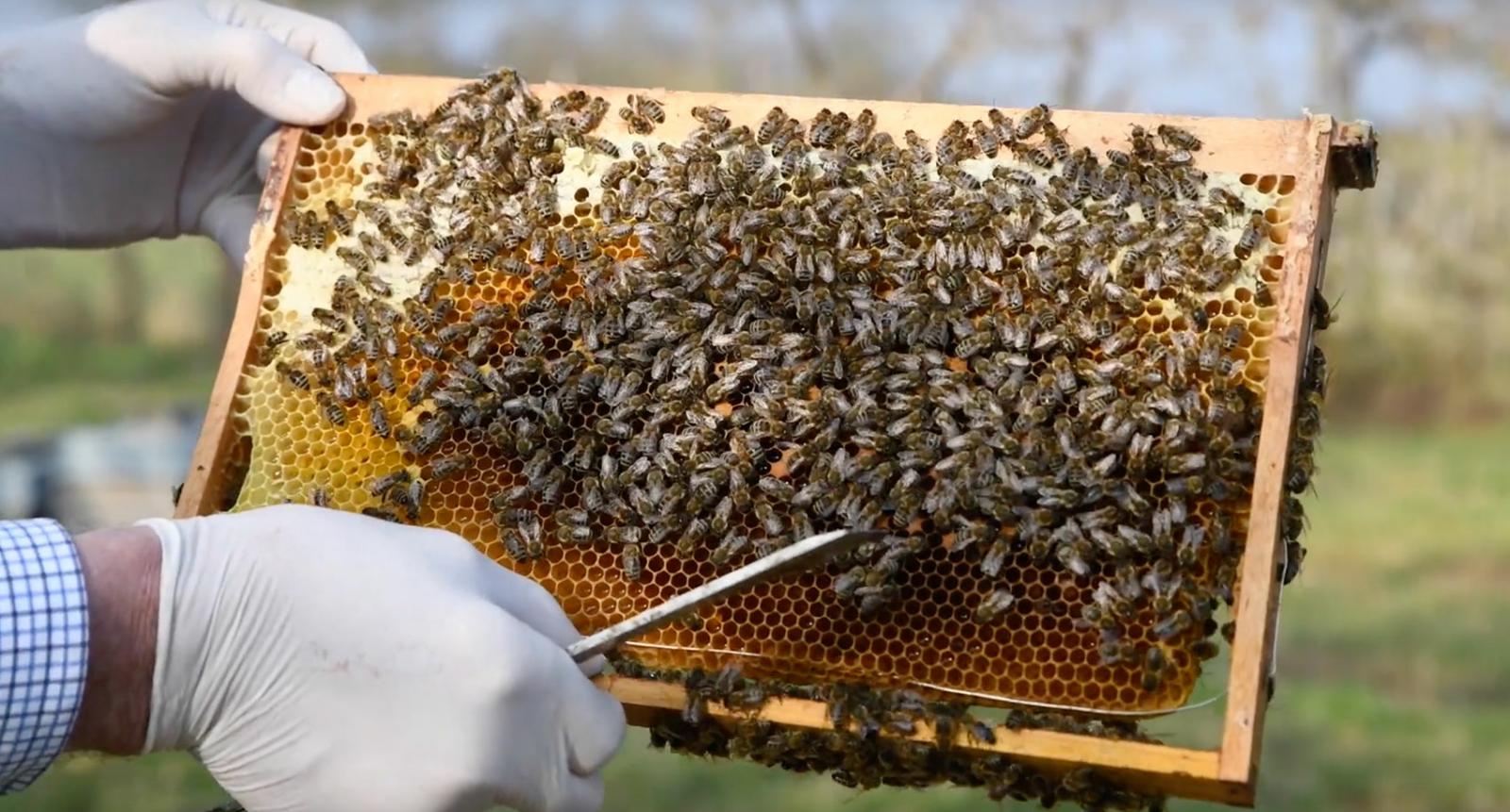 Faszination Genuss - Regionale Produkte - Mosel Honig
